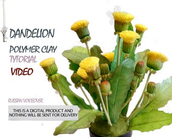 Dandelion video tutorial