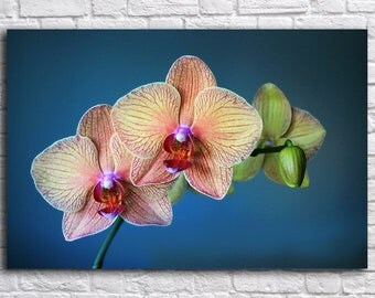 Flower wall art, Canvas Art, Print on Canvas, Orchid on canvas ,  Interior Art, Living Room Decor, Large Wall Art , Extra Large Canvas Art