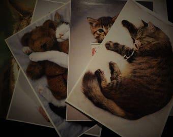 Six cat photos