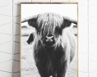 highlander cow, highlander cow print, cow photograph, cow printable, cow wall decor, cow wall art, cow instant print, cow digital art