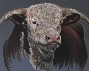 The Hereford Bull