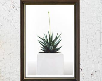 Poster/print cactus image