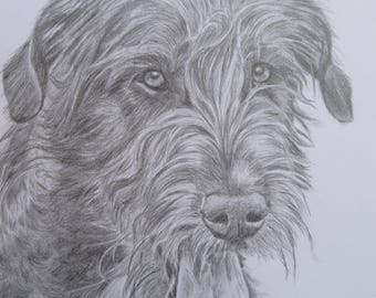 "Pencil Drawing Irish Wolfhound Original no Print 8,2 x 6,6"" / ArtbySandraZereike"