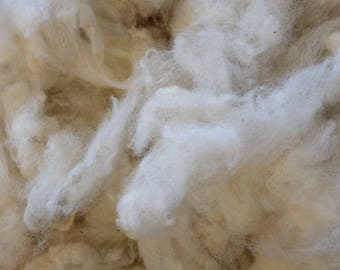 Wool of the Suffolk sheep, washed