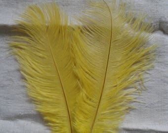 set of 2 17-20 cm yellow ostrich feathers