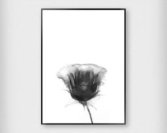 X-Ray Rose Print | Botanical | Black - White | Flower - Art - Poster