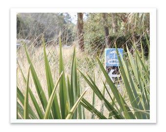 Beach house decor, coastal photography, kiawah island, south carolina, digital download, palm tree, beach signs,