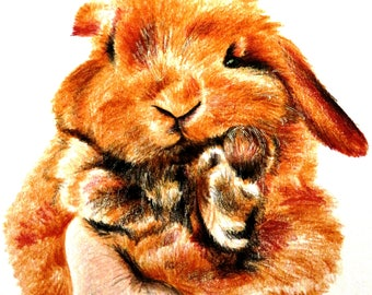 Rabbit brown, drawing