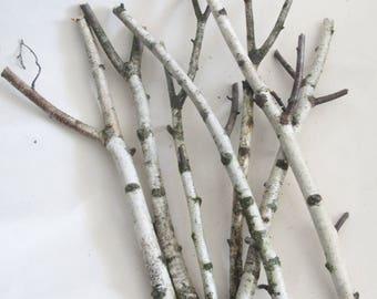 Birch Branches, 7 Birch Sticks, Natural Decor, Forest Supplies