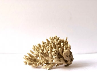 Large White Coral Reef Piece