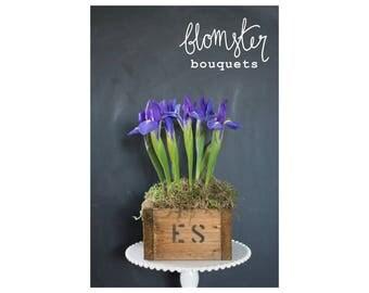 Winter Blues Iris Box - FRESH FLOWERS
