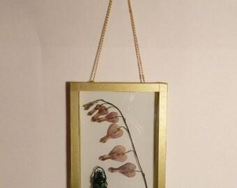 The Herbarium Anderson #2