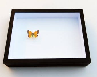 Insect box - 23x30cm black - to store your butterflies and insects.