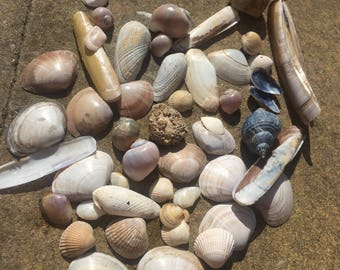 50 mixed shells, crafts, home decor