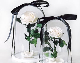 Beauty and the beast, Enchanted Rose, Rose In glass Dome, preserved rose, eternal rose, forever rose, Mother's Day gift, live up to 3 years