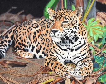 Jaguar Portrait Fine Art Print, Colored Pencil Animal Drawing Print