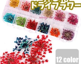 Pressed Flowers Set 12 Colors