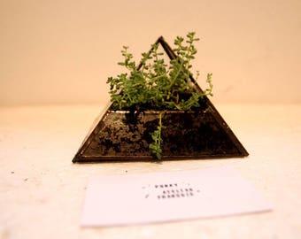 Pyramid Terarium