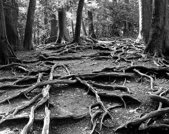 Great photo black and white roots.