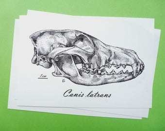 "Coyote Skull 4""x6"" Print"