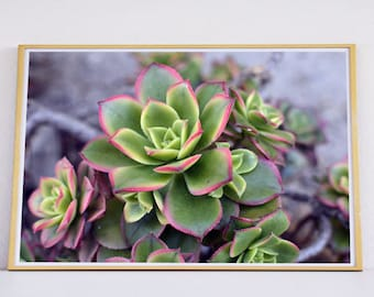 Pink & Green Succulent Photo, Wall Art Prints, PRINTABLE Art, Photography, Home Decor, Office Decor, Southwestern, Plant Artwork, Botanical