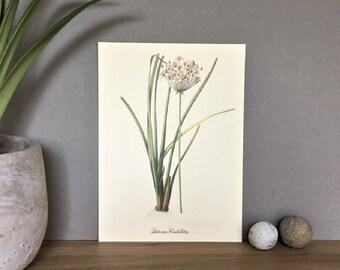 Plant Print, Vintage Botanical Print, Herbarium Print, Plant Poster, Botanical Poster Chart Herb Print, Herb Poster Plant Art Illustration