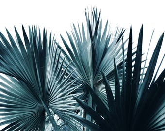 Made-to-order Tropical Botanical Photography Wall Art Prints