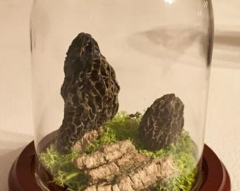 Morel Glass Display Dome (Tall 3 x 4)