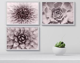Botanical Art Print Set of 3, Succulent gift, Wall Art Set, Gardener gift, Botanical Print Set, Room Decor, gift for gardener, printable