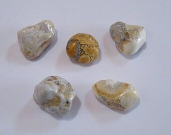 Conglomérat - Lot de 5  pierres naturelles minérales pour confection en tout genre - minéraux - lithothérapie -pierres de soin, de bien être