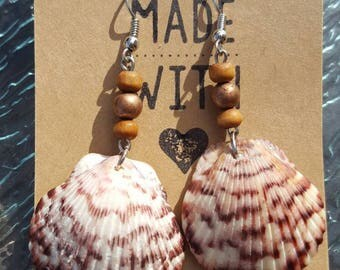 Calico Seashell Earrings/Beach Earrings/Beach Jewelry/Beachy