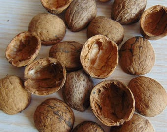 30 pc Walnut shell halves , Christmas Tree Ornament,  Walnut Slices , Crafts Supplies,  Walnut halves creativity,