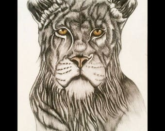 A lioness charcoal drawing