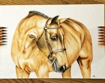 Original A4 horse drawing