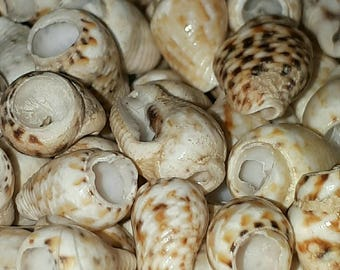 A10 - set of 40 small shells appx 9 to 11 mm drilled - perfect for any creation
