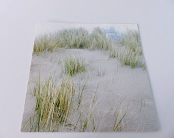sand dune beach dune vegetation square card