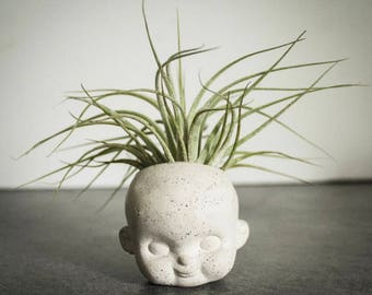 Plain Doll Face air plant planter