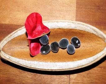 Set of 50 seeds of Zanzibar