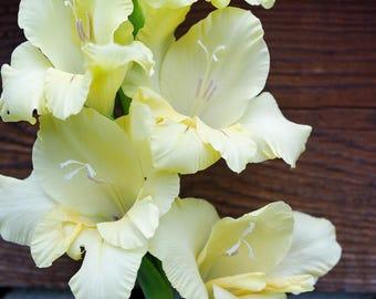 Yellow Gladiolas - 2