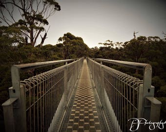 Bridge to Nature Photograph