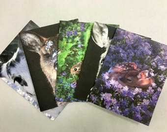Fuzzy Fawn Note Cards  Deer/Fawn Blank Inside Set of 10 with envelopes