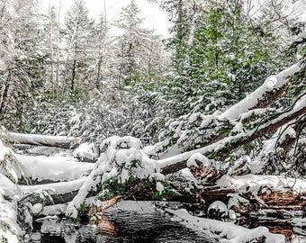 Winter Wonderland at Ricketts Glenn State Park, Pennsylvania, Photography Print