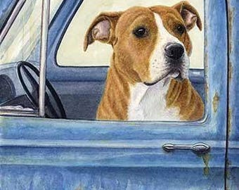 I'll Watch The Truck A Limited Edition American Staffordshire Terrier Print