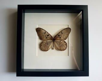 Butterfly in frame - Idea Blanchardis