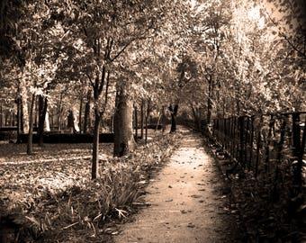 Aranjuez Path, Sepia photograph
