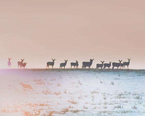 """""""Horizon Line"""" - landscape photography"""