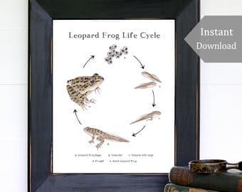Leopard Frog Life Cycle, Educational Printable Art - A4 and 8x10 - Lithobates, School Room, Homeschool, Montessori, Nature Study