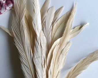 COQUE TAIL FEATHERS Loose / Dark Creme, Champagne / 180