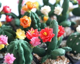 6 CACTUS Miniature Polymer Clay Handmade Flowers Supply Dollhouse Wedding Gift