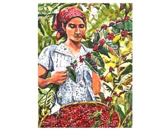 Woman Picking Coffee beans  Cherries Original Watercolor Painting Colombia South America Painting Guatemala Farm Finca Art Gwen Meyerson